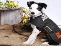 Outback Tails Oilskin Dog Coat - Vaughn Springs