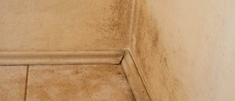 damp wall stock image